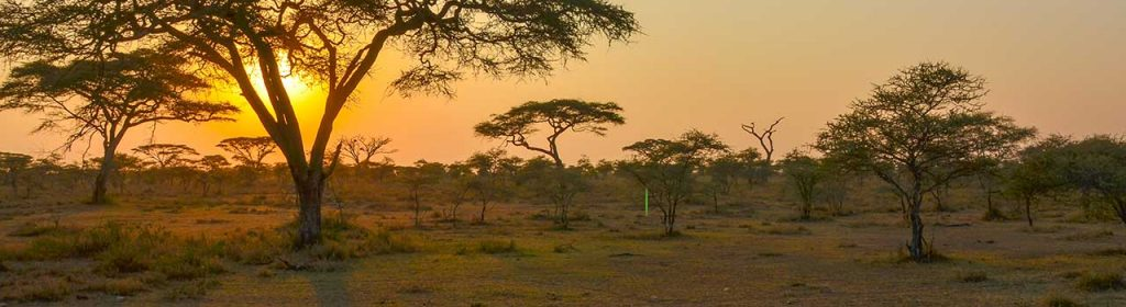 Afrika Leren Bank.Schapenvachten Koeienhuiden Afrikaanse Dierenhuiden Out Of