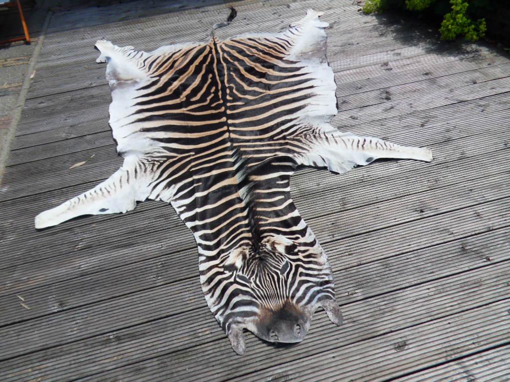 zebrahuid van de Burchell's zebra